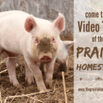 Come Take a Walk Around The Prairie Homestead! (Video)