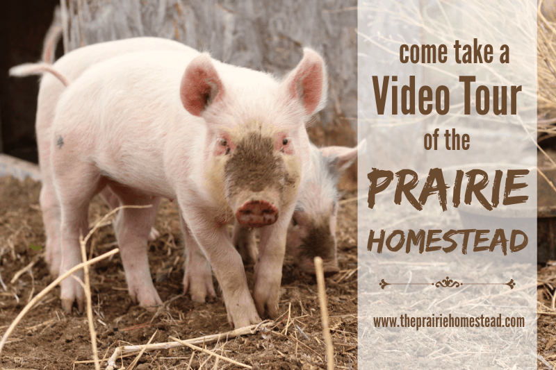 farm video tour