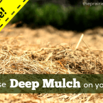 Deep Mulching the Garden: An Update