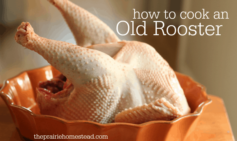 how to cook old chicken