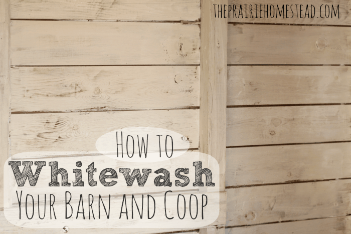 how to whitewash a barn or chicken coop