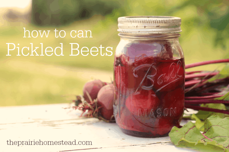 how to can beets