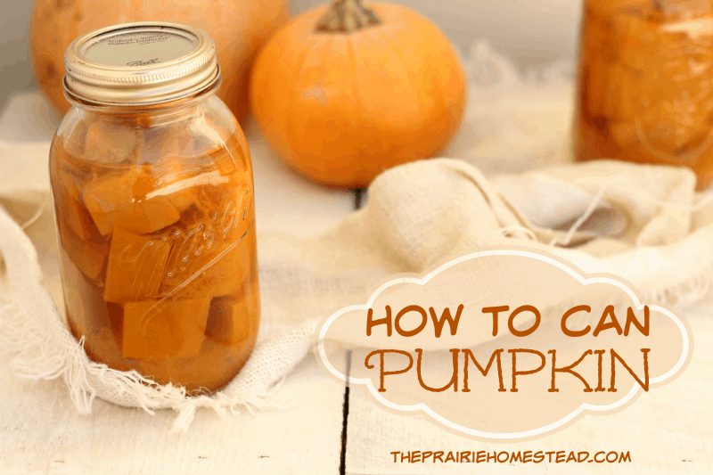 Canning pumpkin - it's possible! You can the cubes and then mash when you are needing puree. Easy peasy.