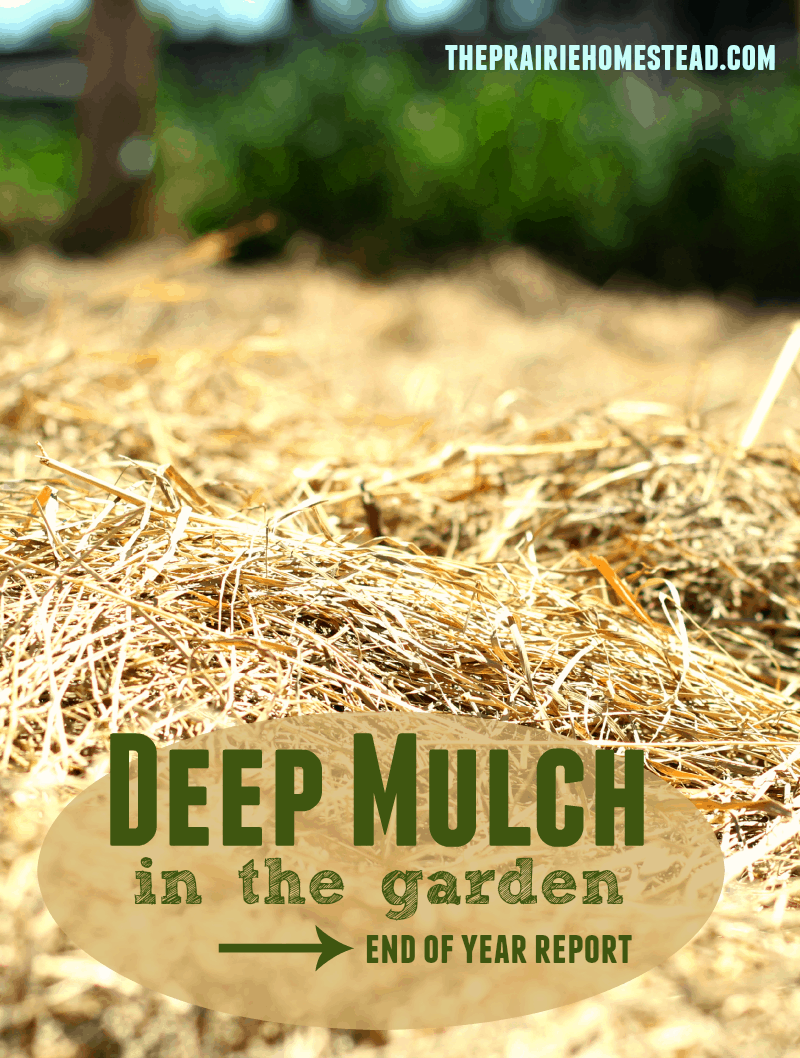 how to use deep mulch in your garden for better moisture retention and fewer weeds!