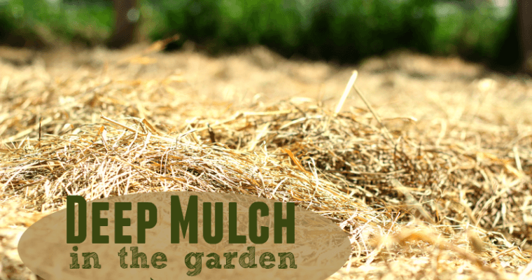 Our Deep Mulch Garden: Final Wrap-Up