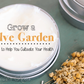 10 healing herbs to grow in your salve garden