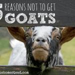 5 Reasons You Shouldn't Get Goats