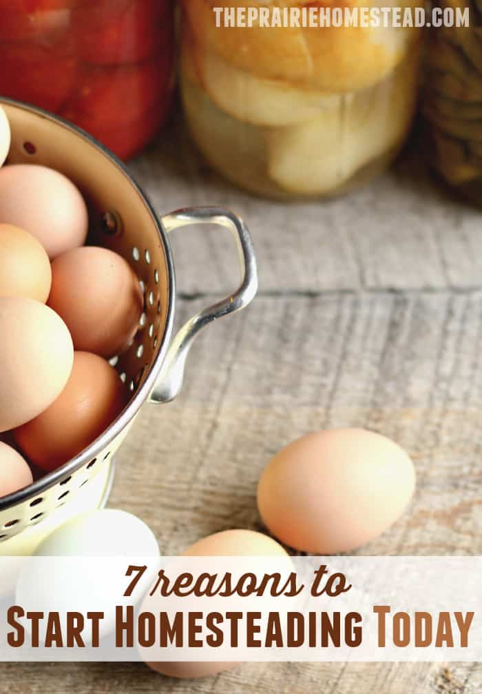 7 Reasons to Start Homesteading Today