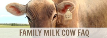 family milk cow FAQ
