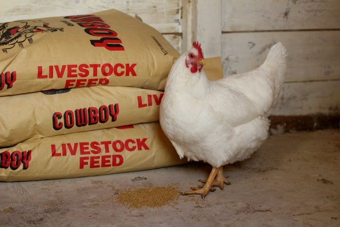 how to cut your chicken feed bill