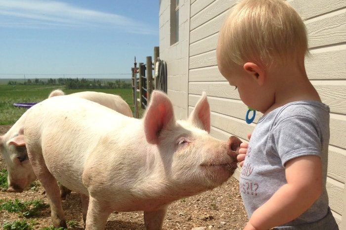 7 Reasons to Start Homesteading Today: homesteading with children