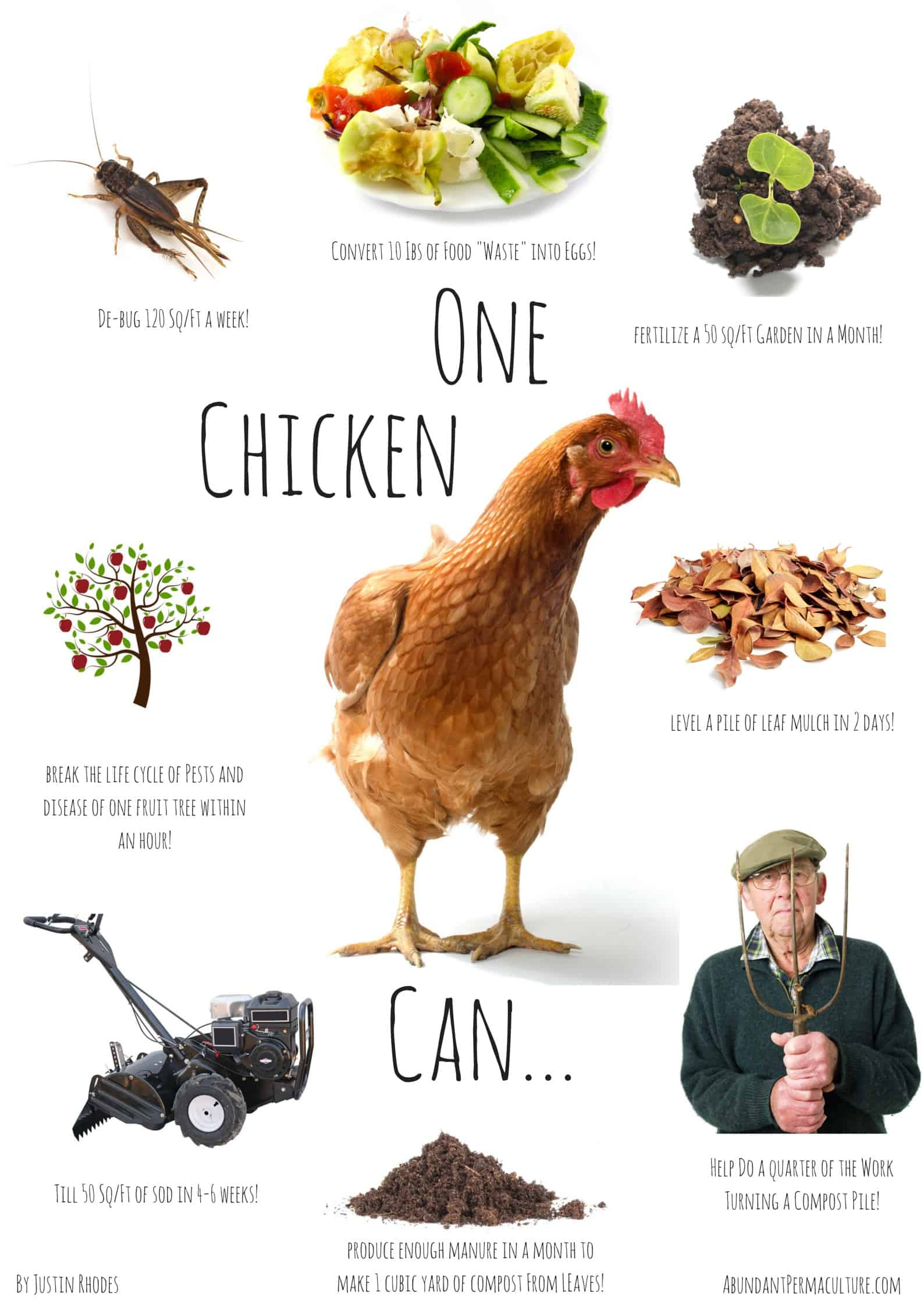 8 Ways To Use Chickens In The Garden Prairie Homestead Chicken Diagram Roosters Pinterest Gardening With Poster
