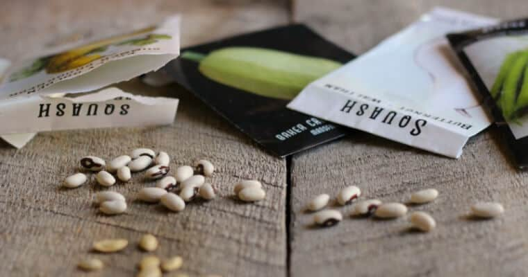 How to Test Seeds for Viability