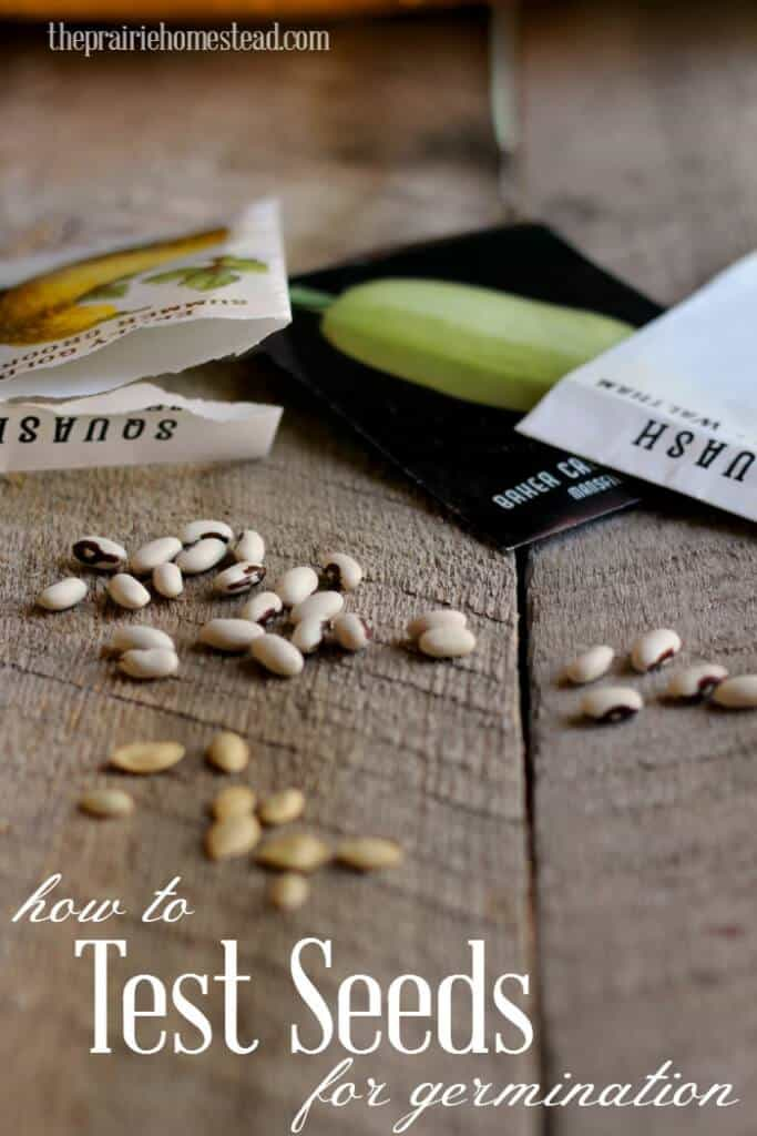 How to test seeds for viability and germination
