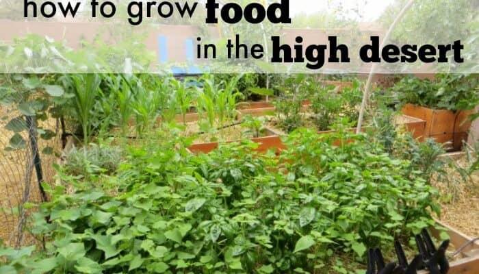 6 Tips for Successful Desert Gardening