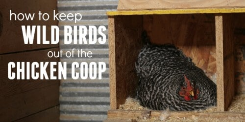 how to keep wild birds out of a chicken coop