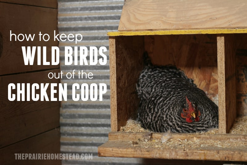 How To Keep Wild Birds Out Of A En Coop The Prairie