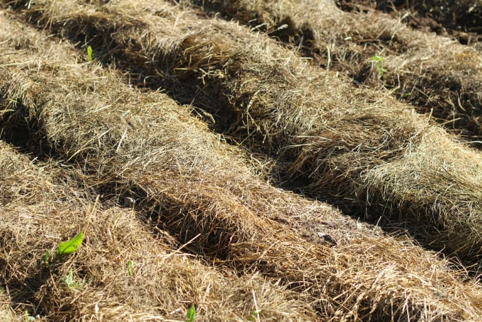 deep mulch gardening, deep mulch gardening faqs • the prairie homestead, Design ideen