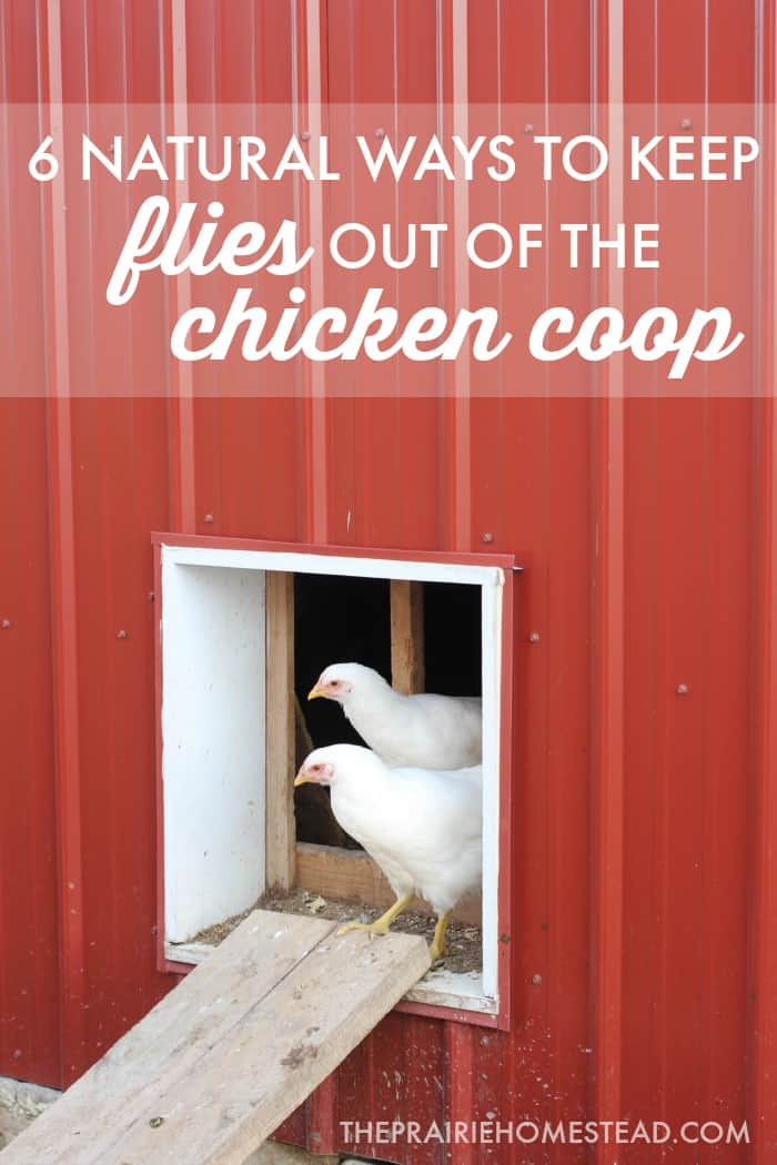 fly control in the chicken coop