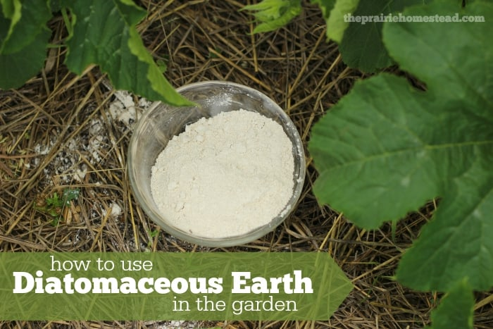 Diatomaceous Earth Uses In The Garden