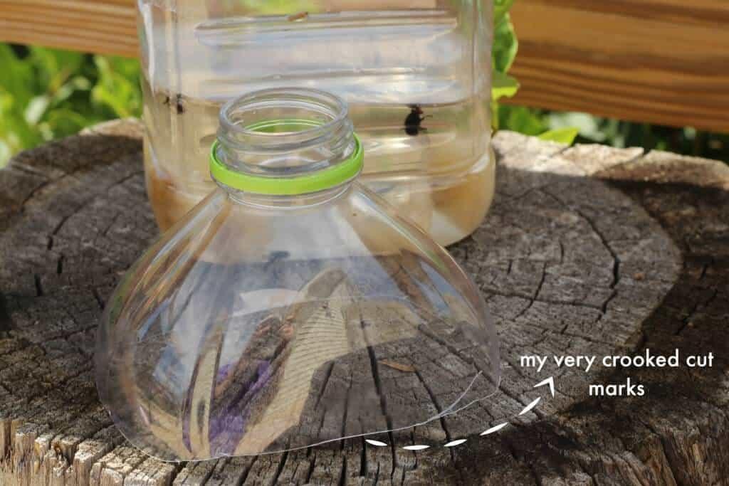 Homemade Fly Trap | The Prairie Homestead