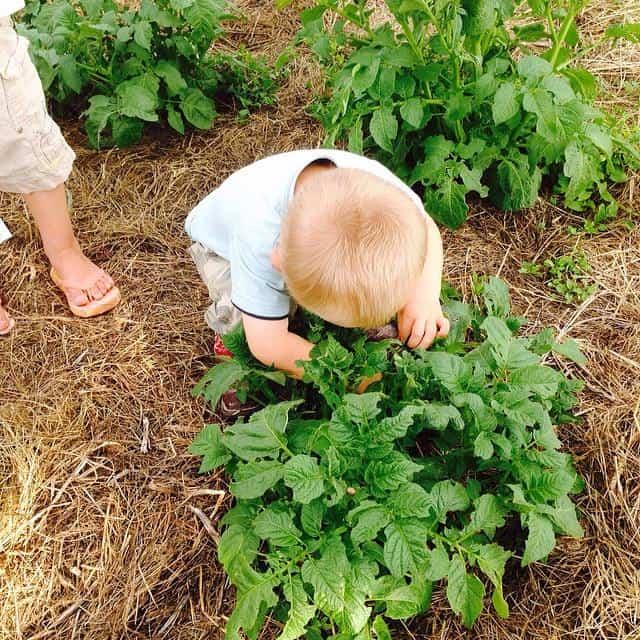 The Prairie Kids pickin' bugs.