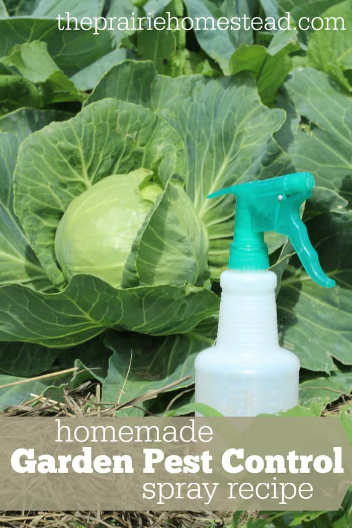 Organic pest control spray for gardens - Natural insect repellent for gardens ...