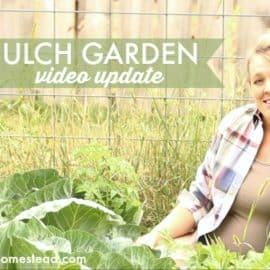 deep mulch garden video update