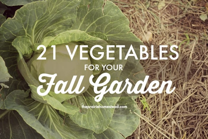 vegetables to plant in fall garden
