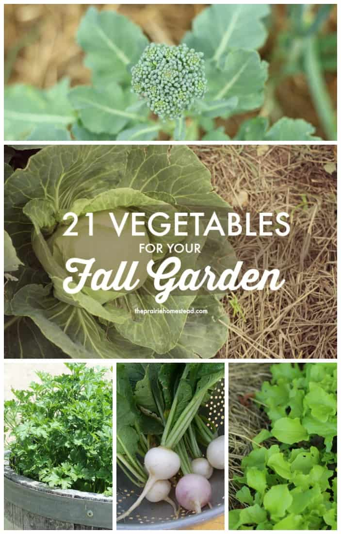 vegetables to plant in fall garden - Fall Garden Plant