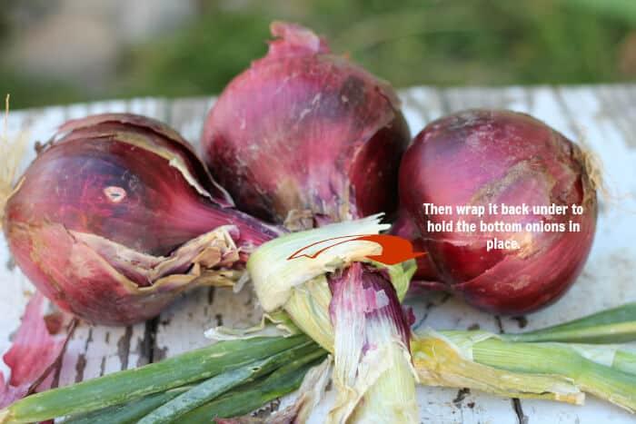 braid-onions-3