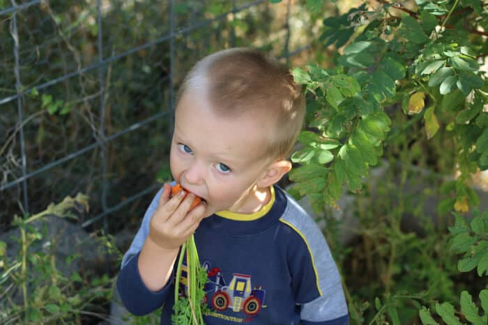 Chowing down on a freshly pulled carrot-- dirt and all...