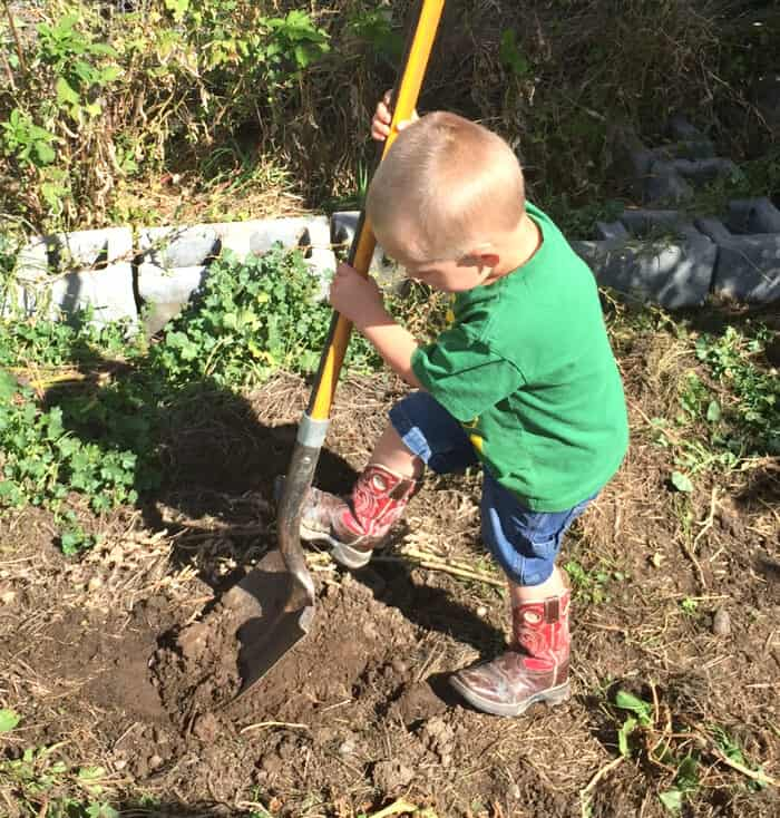 Our First Year of Homeschooling - Digging for potatoes   The Prairie Homestead