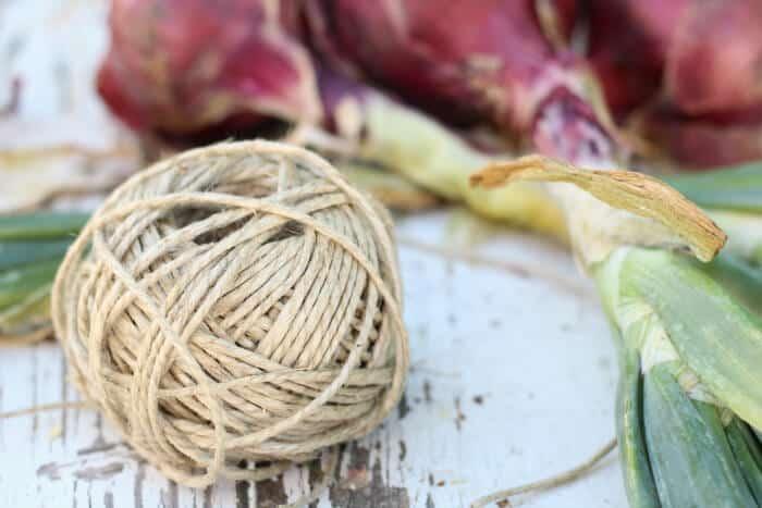 harvesting and braiding onions