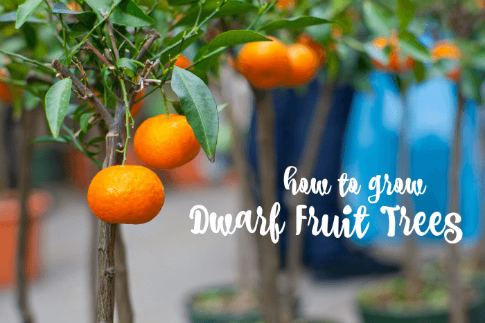 how to keep ants off my fruit trees