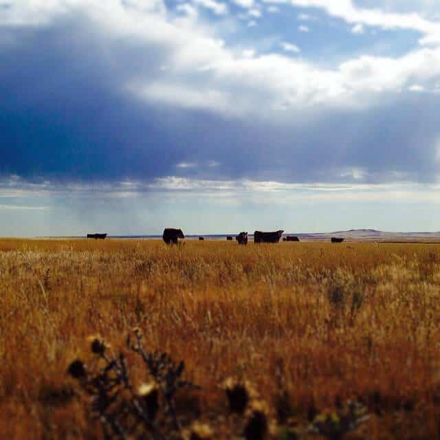 wyoming prairie