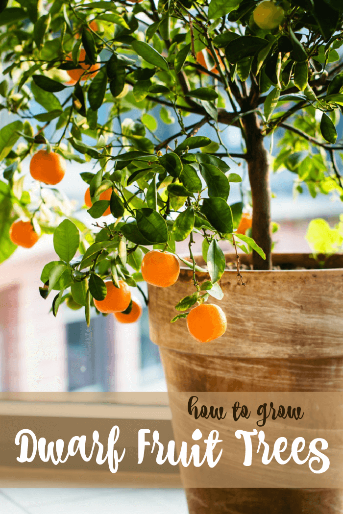 Growing Dwarf Fruit Trees • The Prairie Homestead