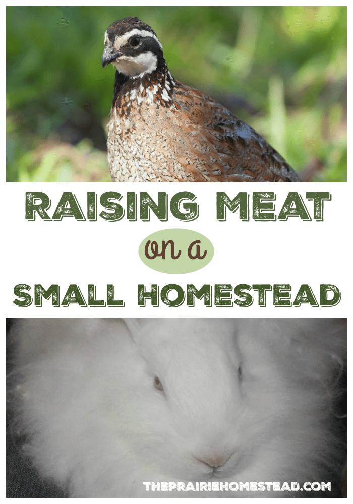 Raising Meat on a Small Homestead #raisingmeat | The Prairie Homestead