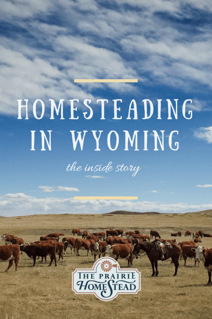 homesteading in wyoming
