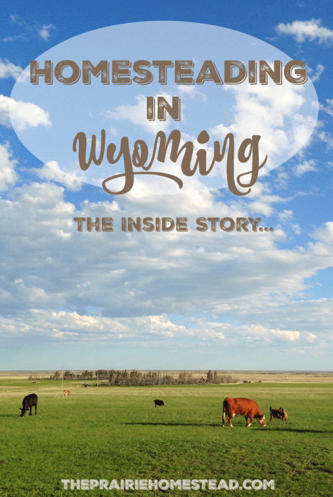 homesteading-in-wyoming