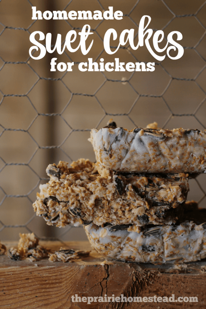 Homemade Suet Cakes for Chickens