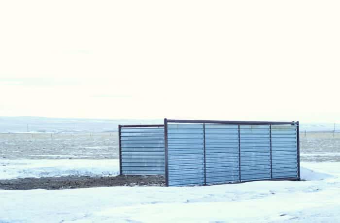 Managing Livestock in the Winter: steel windbreak in wyoming for cattle