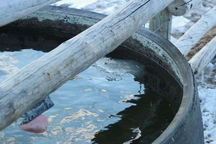 Managing Livestock in the Winter: stock tank in winter with heater
