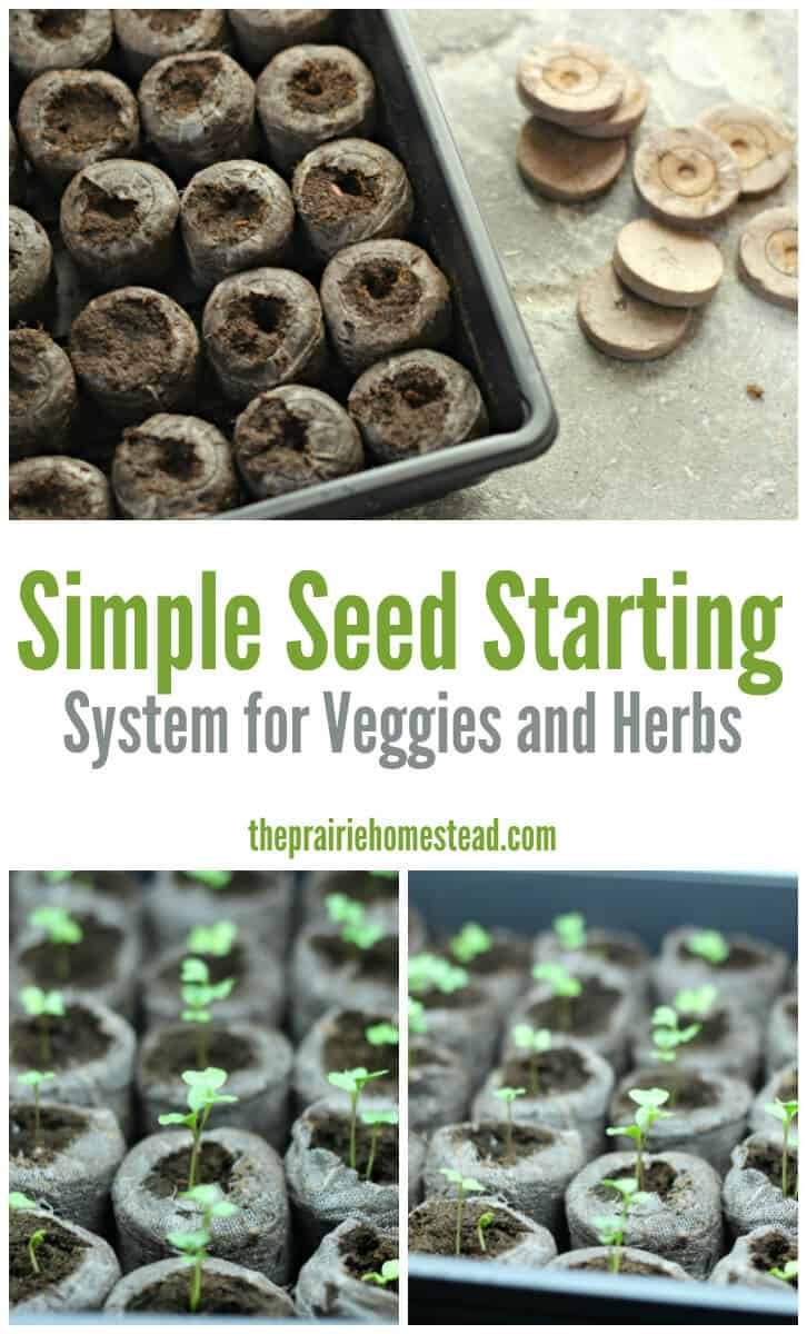 easy cheap seed starting system