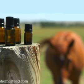 essential oil hacks for modern homesteading