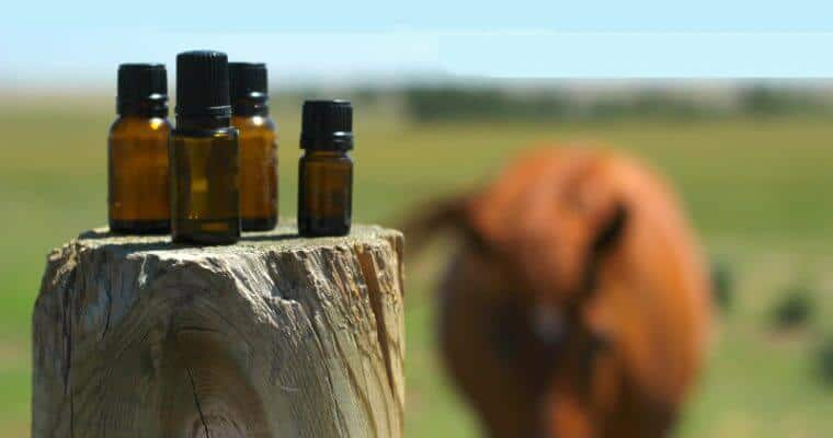30 Essential Oil Hacks for Homesteading