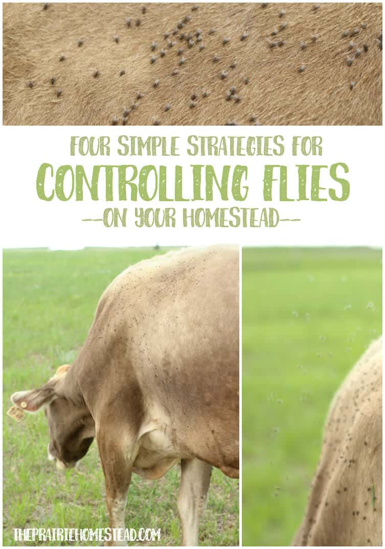 7 strategies for farm fly control