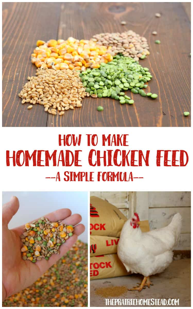 How to Make Homemade Chicken Feed (A Simple Formula)
