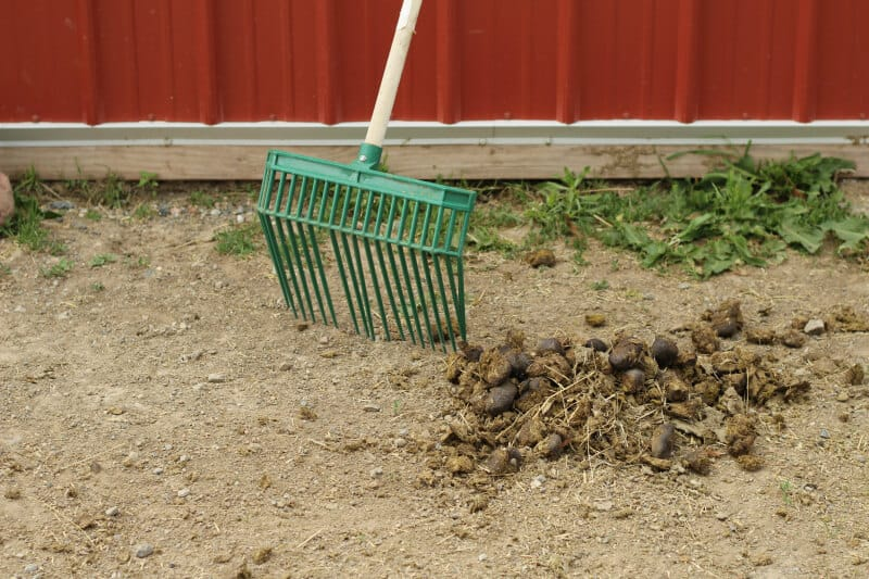 manage manure for fewer flies