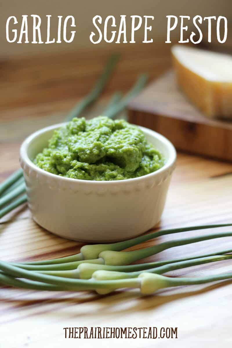 Garlic Scape Pesto Recipe • The Prairie Homestead